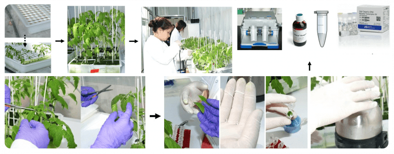 Efecte de l'aplicació de bioestimulants