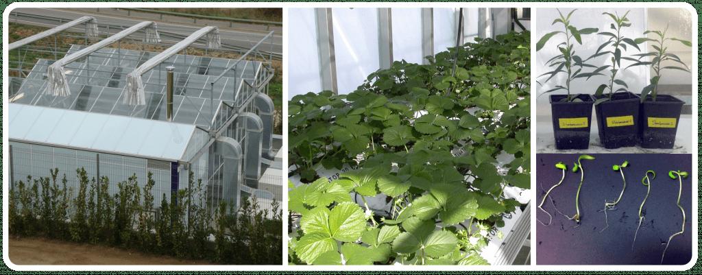 Promoció de creixement en plantes