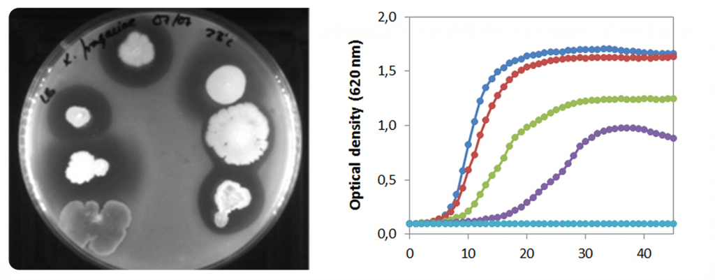 Aïllament i assajos in vitro
