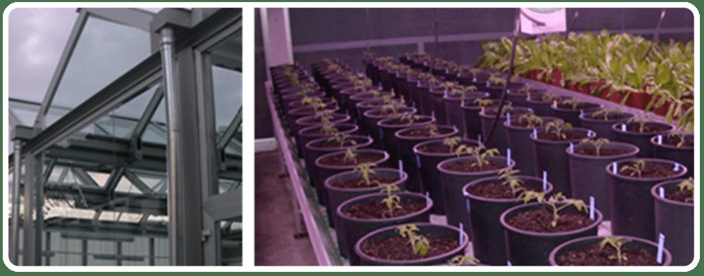 Assajos d'eficàcia en plantes sota ambient controlat