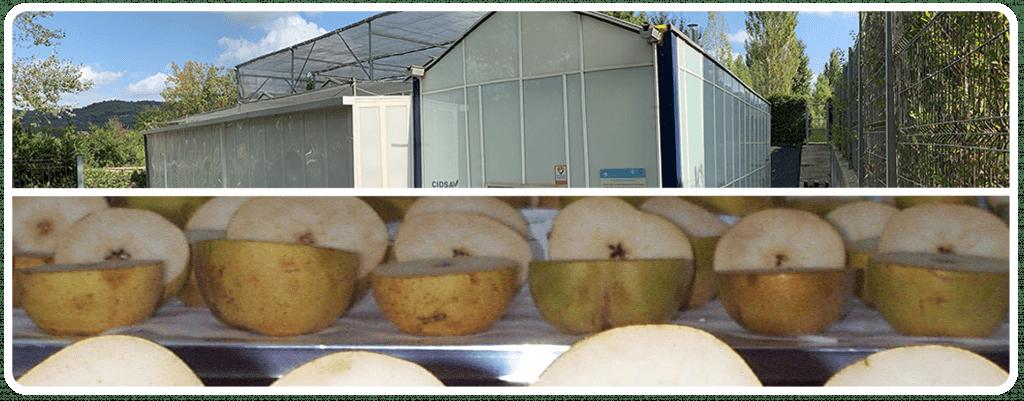 Postharver-greenhouse